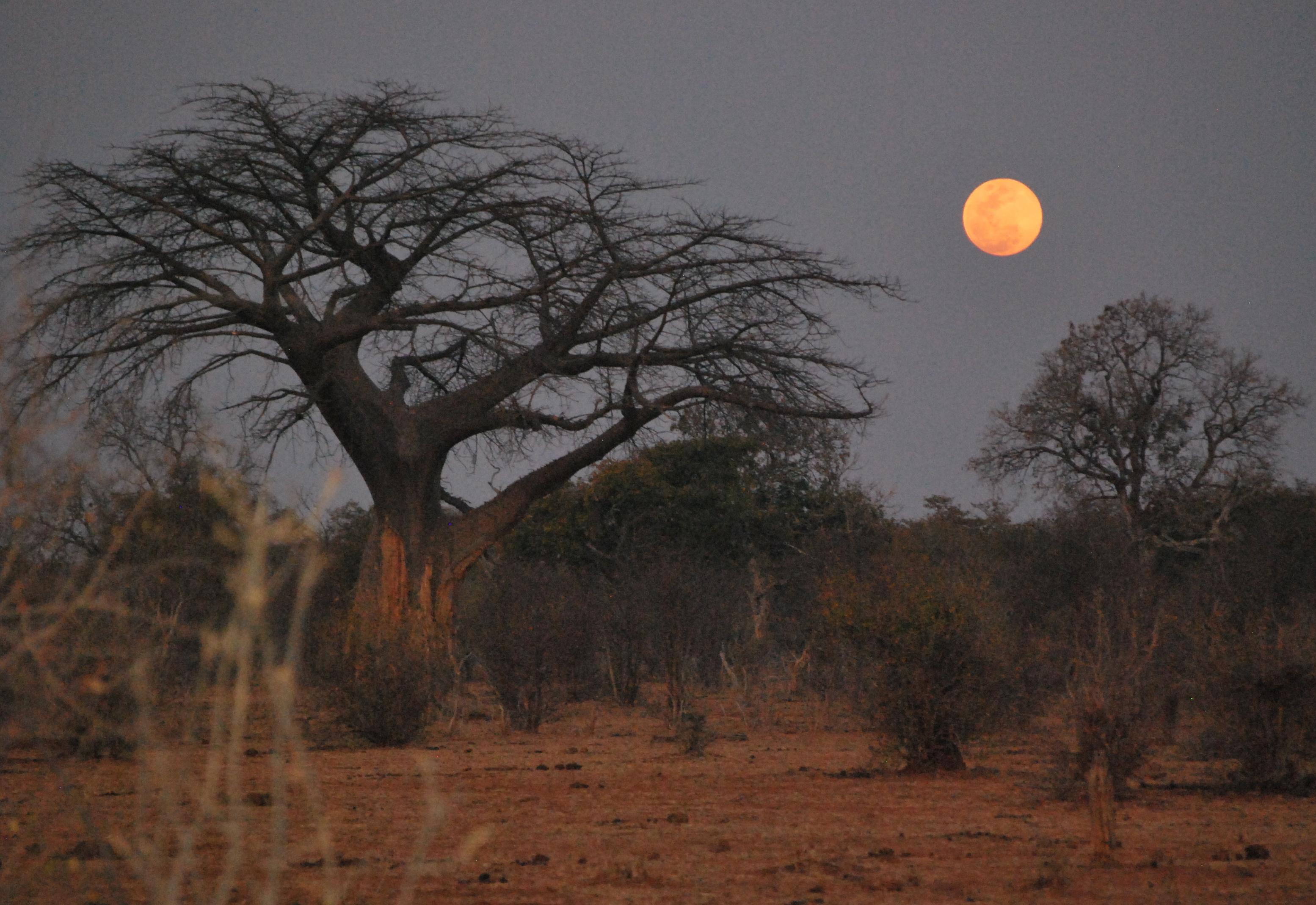 Botswana, Africa - Chobe National Park Safari Journey For 4